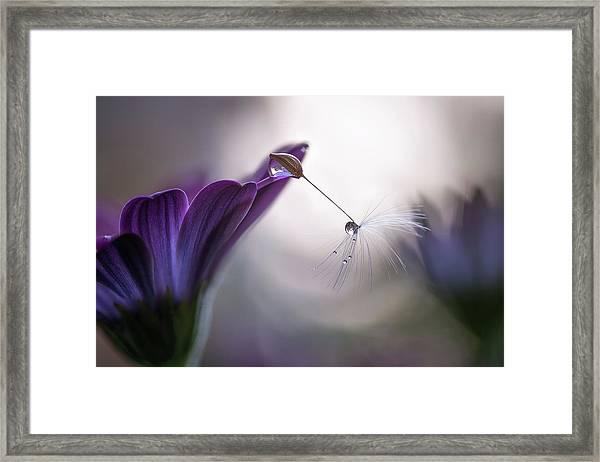Purple Rain Framed Print by Silvia Spedicato