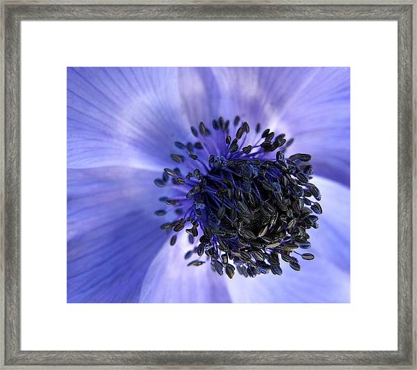 Purple Seed Haze Framed Print