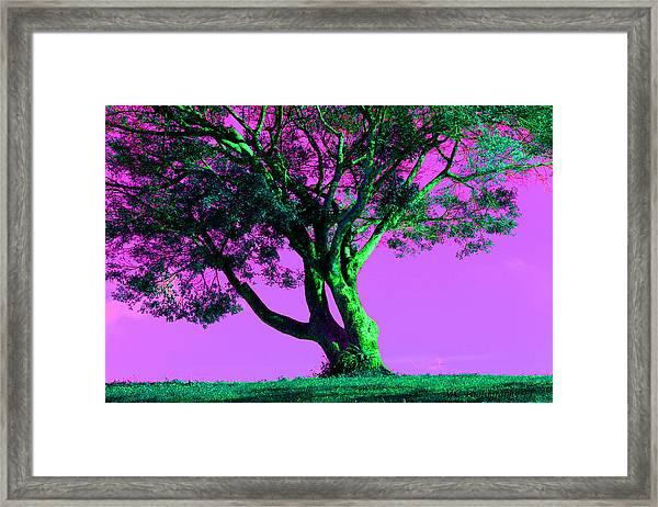 Purple Sky Tree Framed Print