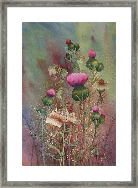 Purple Thistle Framed Print