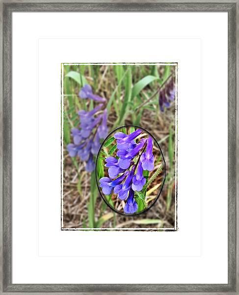 Purple Wildflowers Framed Print