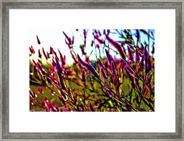 Purpleness Framed Print