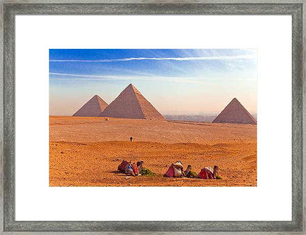 Pyramids And Camels Framed Print