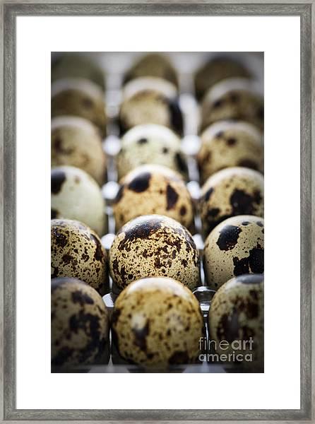 Quail Eggs Framed Print