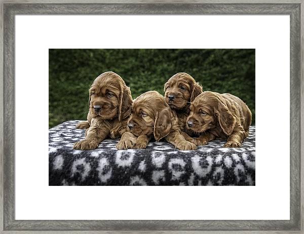 Quatro Framed Print