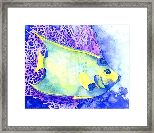 Queen Angelfish Framed Print