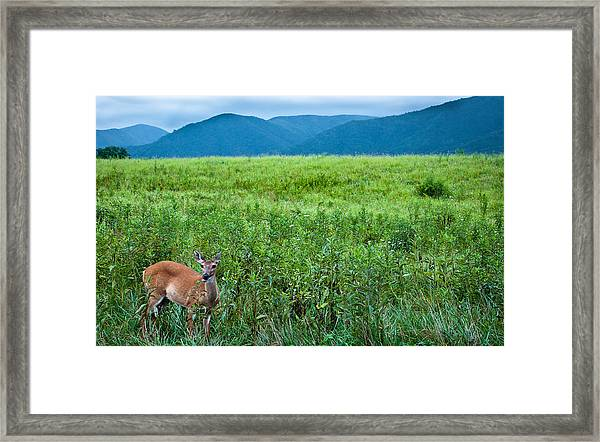 Queen Of The Cove Framed Print by Ron Plasencia
