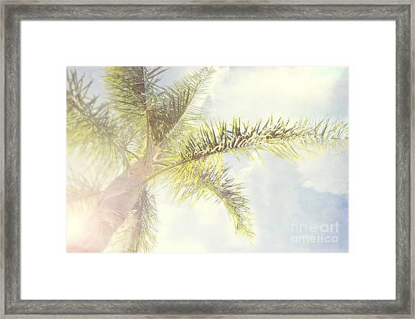 Queen Palm Framed Print