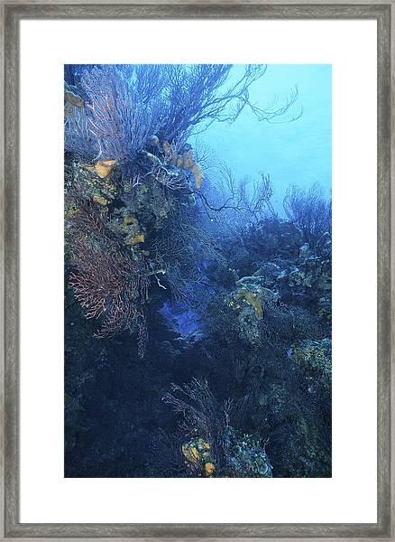 Quiet Beauty Framed Print