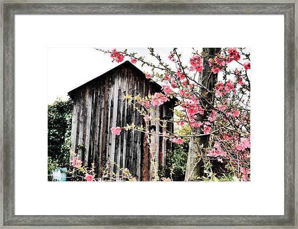 Quince Dreams Framed Print