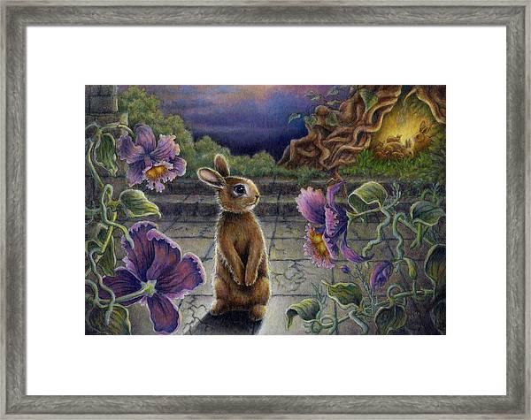 Rabbit Dreams Framed Print