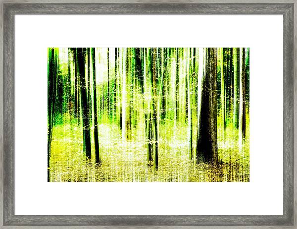 Radiation Forest Framed Print