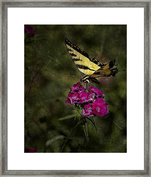 Ragged Wings Framed Print