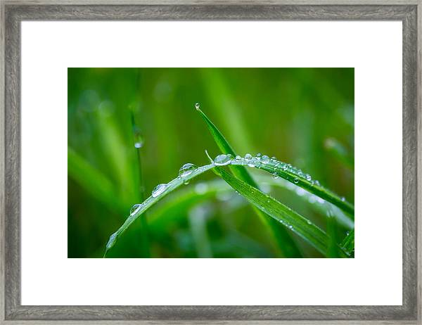 Rain Covered Grass Framed Print