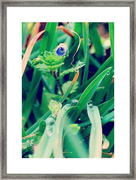 Rain Flower Framed Print