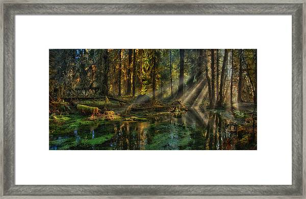 Rain Forest Sunbeams Framed Print