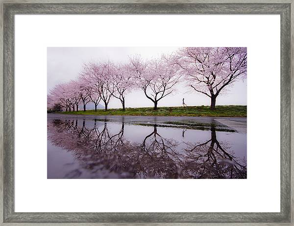 Rain Of Spring Framed Print