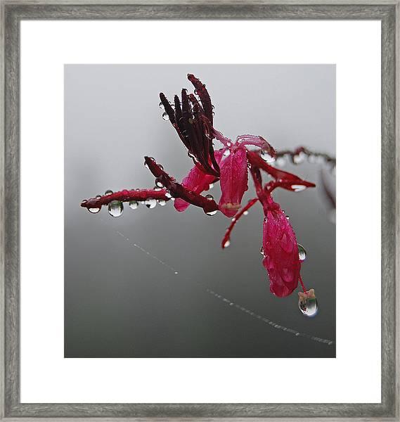 Rain Weaver Framed Print