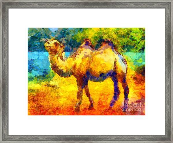 Rainbow Camel Framed Print