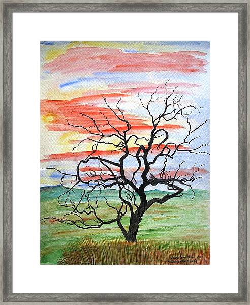 Rainbow Mesquite Framed Print
