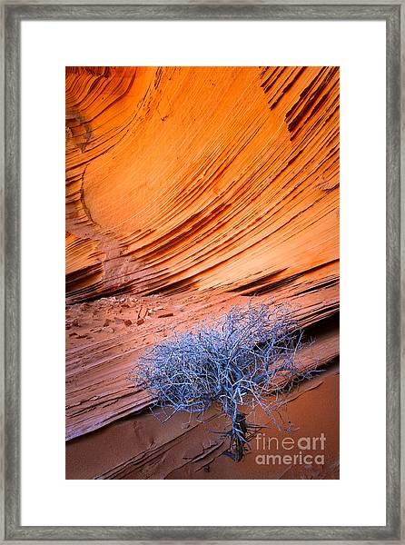 Rainbow Rocks Dead Bush #1 Framed Print