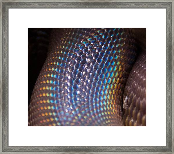 Rainbow Scales Framed Print by Debbie Cundy