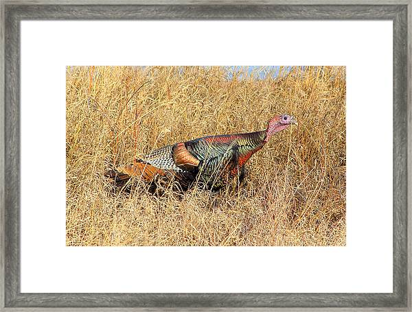 Rainbow Turkey Framed Print