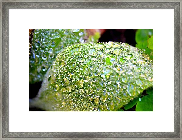 Framed Print featuring the photograph Lambs Ear Raindrops by Candice Trimble