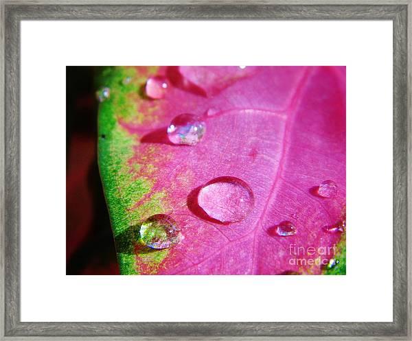 Raindrop On The Leaf Framed Print