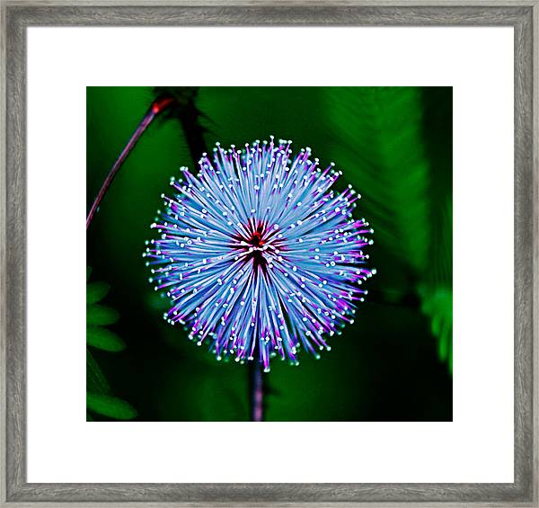 Rainforest Flower Framed Print
