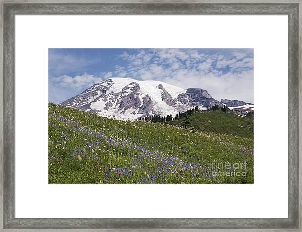 Rainier's Wildflowers Framed Print