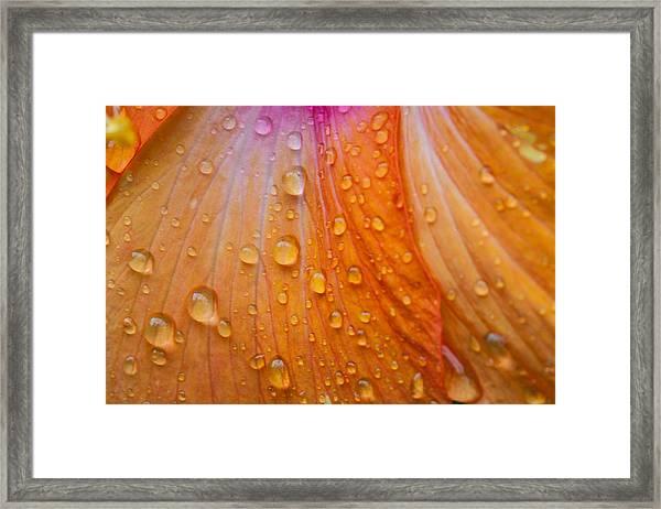 Rainy Day Hibiscus Framed Print
