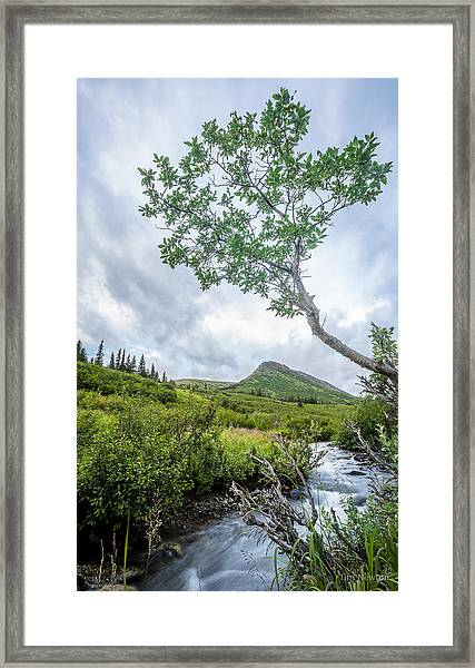 Rainy Evening On A Mountain Stream Framed Print