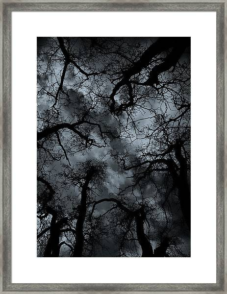 Random Thoughts - Nature Abstract Framed Print