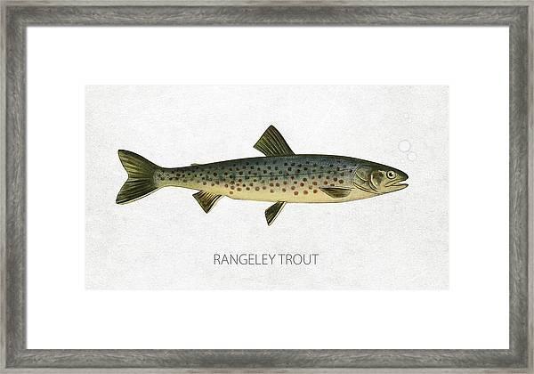 Rangeley Trout Framed Print