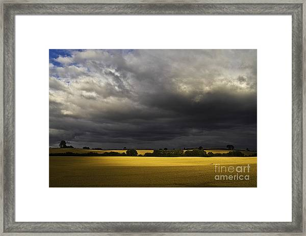 Rapefield Under Dark Sky Framed Print