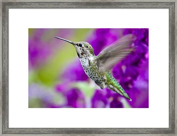 Rapid Flight Framed Print
