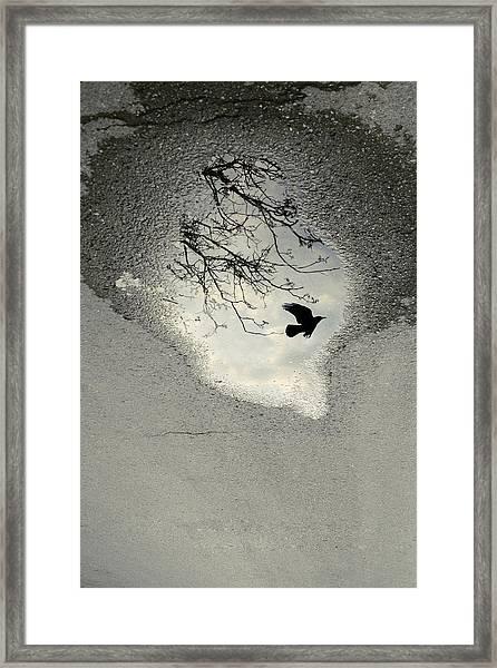 Raven Reflection Framed Print