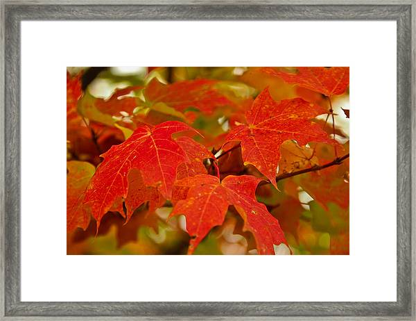 Ravishing Fall Framed Print