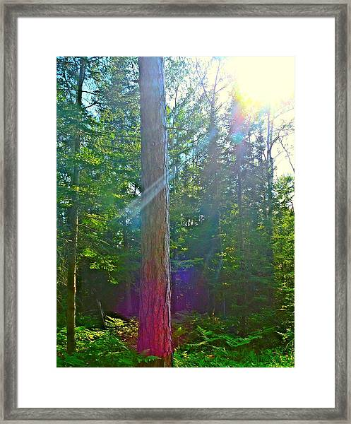 Framed Print featuring the photograph Ray Of Hope by Gigi Dequanne