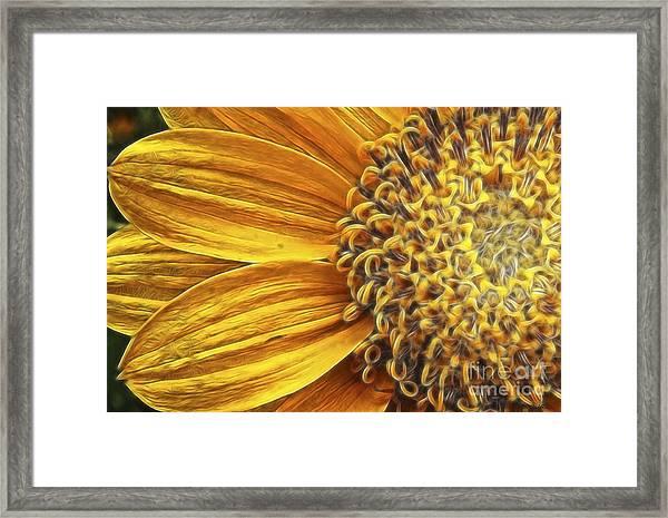 Rays Of Sunshine Framed Print