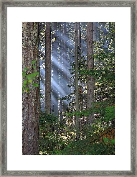 Framed Print featuring the photograph Rays by Randy Hall
