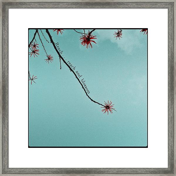 Reach And Blossom Framed Print