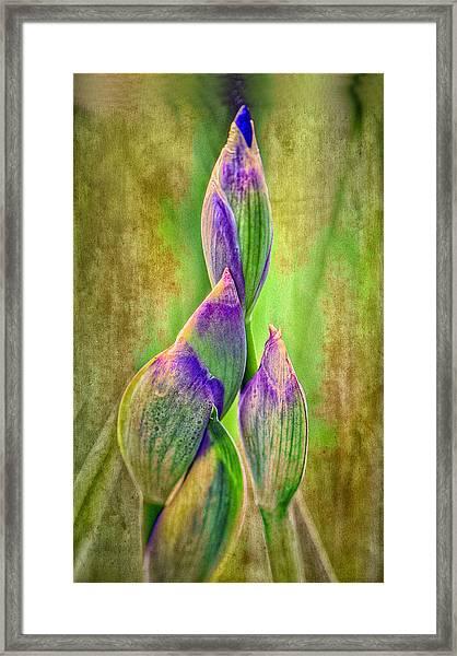 Reach For Spring Framed Print