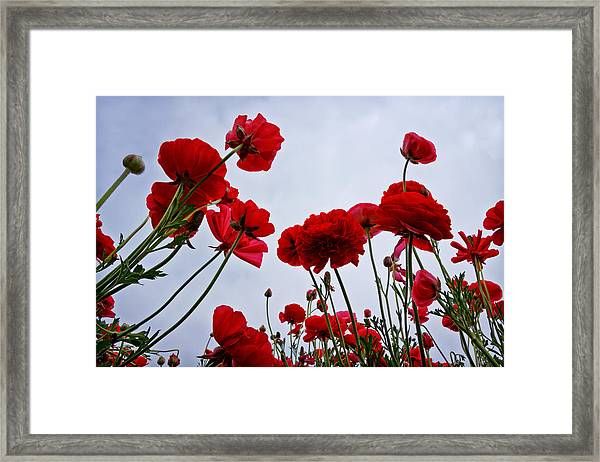 Reaching Towards The Sky Framed Print by Donna Pagakis