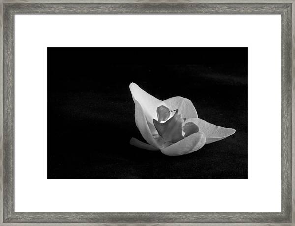 Reclining Orchid Framed Print