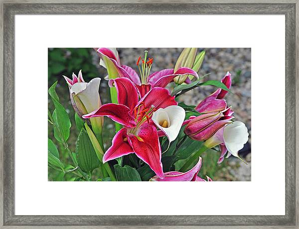 Red And White Lilies Framed Print