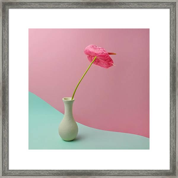 Red Anthurium In White Vase Framed Print by Juj Winn