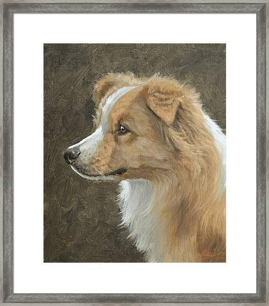 Red Border Collie Portrait Framed Print