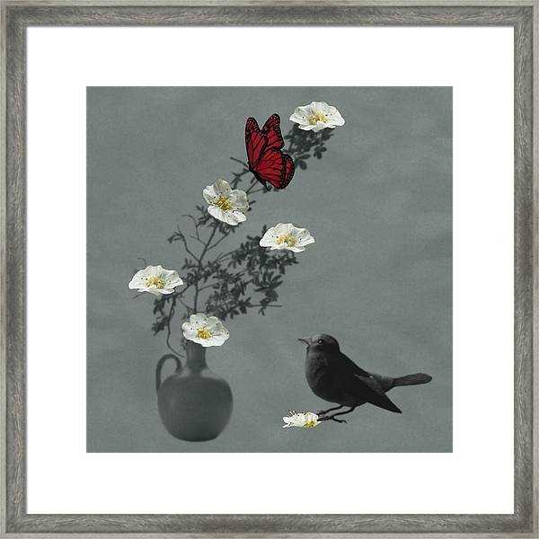 Red Butterfly In The Eyes Of The Blackbird Framed Print